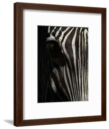 Ever Sleek 2-Art Wolfe-Framed Photographic Print