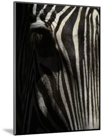 Ever Sleek 2-Art Wolfe-Mounted Photographic Print
