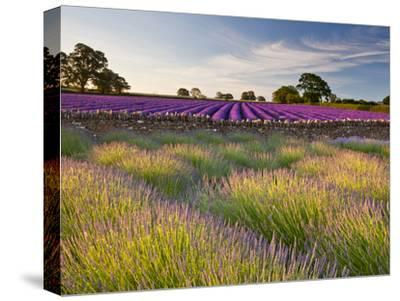 The Scent of Summer-Doug Chinnery-Stretched Canvas Print