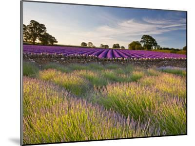 The Scent of Summer-Doug Chinnery-Mounted Photographic Print