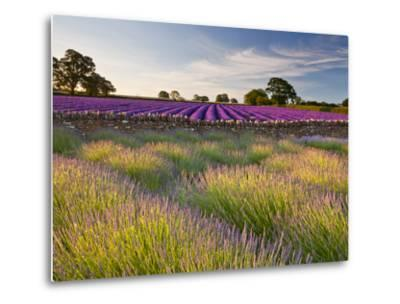 The Scent of Summer-Doug Chinnery-Metal Print