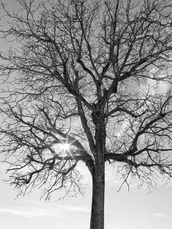 Eye of the Tree-Marco Carmassi-Framed Photographic Print