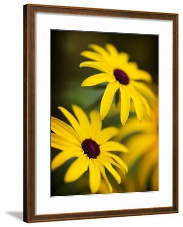 Daisy Face-Doug Chinnery-Framed Photographic Print