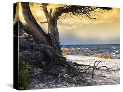 The Old Tree and the Sea-Marco Carmassi-Stretched Canvas Print