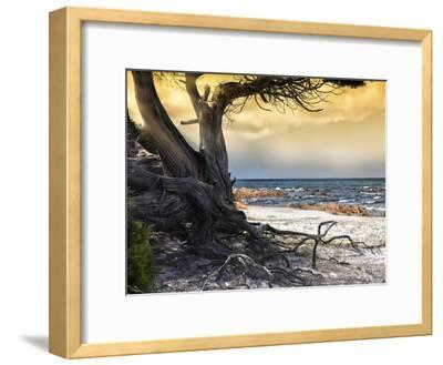 The Old Tree and the Sea-Marco Carmassi-Framed Photographic Print