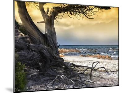 The Old Tree and the Sea-Marco Carmassi-Mounted Photographic Print