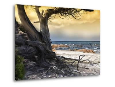 The Old Tree and the Sea-Marco Carmassi-Metal Print