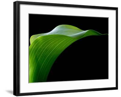 Majestic Leaf 1-Doug Chinnery-Framed Photographic Print