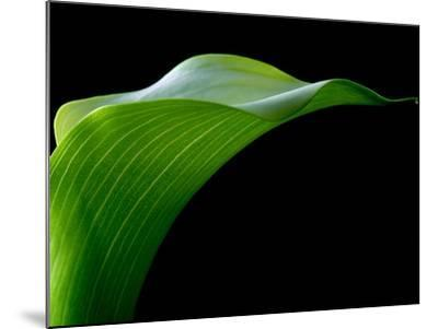 Majestic Leaf 1-Doug Chinnery-Mounted Photographic Print