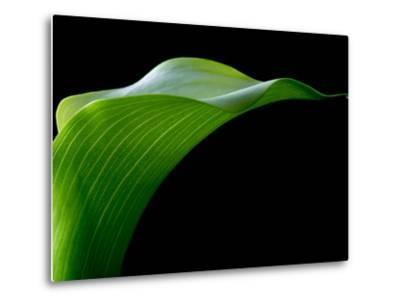 Majestic Leaf 1-Doug Chinnery-Metal Print
