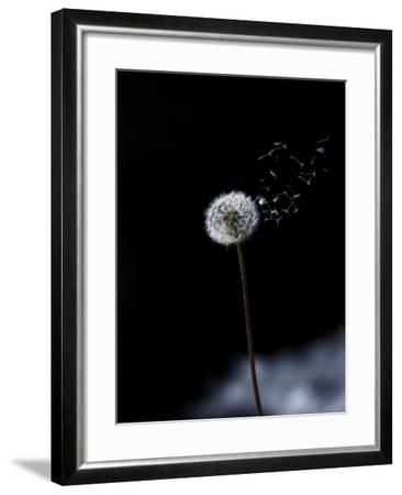 Just a Wind Blow-Marco Carmassi-Framed Photographic Print
