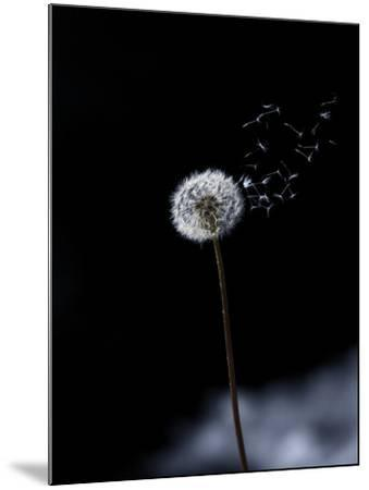 Just a Wind Blow-Marco Carmassi-Mounted Photographic Print