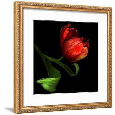 Parrot Tulip-Magda Indigo-Framed Photographic Print