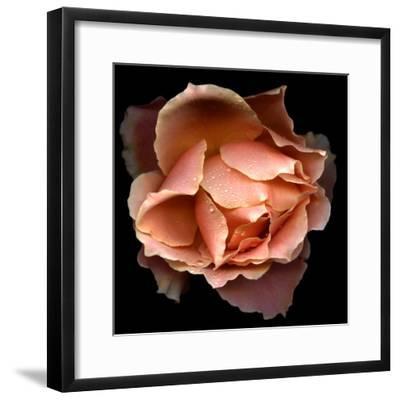 Rose Just Joey-Magda Indigo-Framed Photographic Print