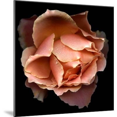 Rose Just Joey-Magda Indigo-Mounted Photographic Print