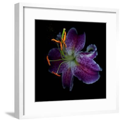 Lilly's Pollen-Magda Indigo-Framed Photographic Print