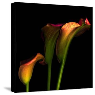 Calla Lily 2-Magda Indigo-Stretched Canvas Print