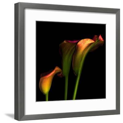 Calla Lily 2-Magda Indigo-Framed Photographic Print