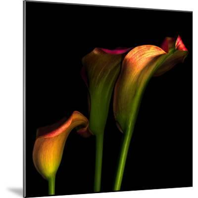 Calla Lily 2-Magda Indigo-Mounted Photographic Print