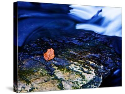 Blue-Doug Chinnery-Stretched Canvas Print