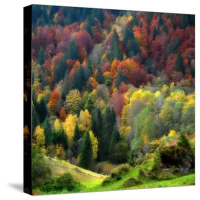 Autumn Erupting-Philippe Sainte-Laudy-Stretched Canvas Print
