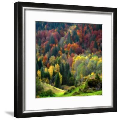 Autumn Erupting-Philippe Sainte-Laudy-Framed Photographic Print