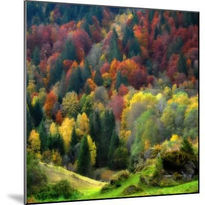 Autumn Erupting-Philippe Sainte-Laudy-Mounted Photographic Print