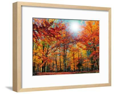 Camouflage-Philippe Sainte-Laudy-Framed Photographic Print