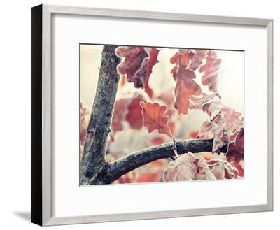 Chene and Light-Philippe Sainte-Laudy-Framed Photographic Print