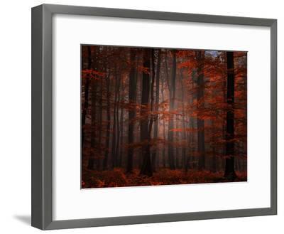 Spiritual Wood-Philippe Sainte-Laudy-Framed Premium Photographic Print