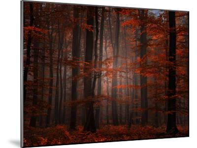 Spiritual Wood-Philippe Sainte-Laudy-Mounted Premium Photographic Print