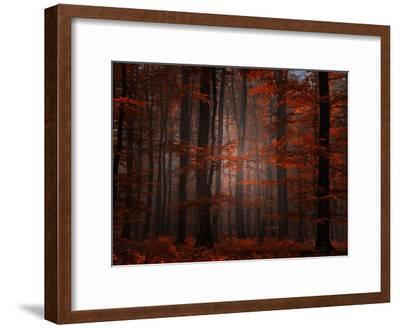 Spiritual Wood-Philippe Sainte-Laudy-Framed Photographic Print