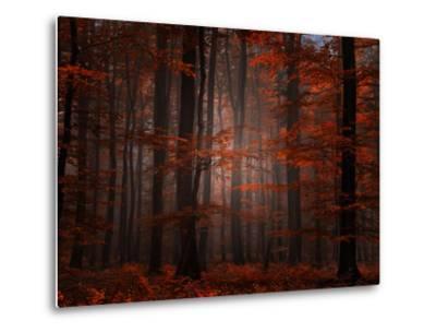 Spiritual Wood-Philippe Sainte-Laudy-Metal Print