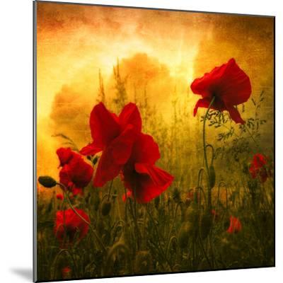 Red for Love-Philippe Sainte-Laudy-Mounted Photographic Print
