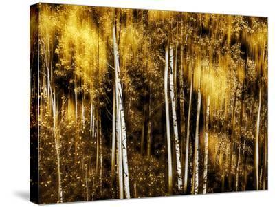 Golden-Ursula Abresch-Stretched Canvas Print