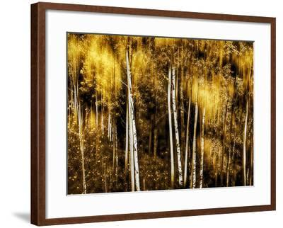 Golden-Ursula Abresch-Framed Photographic Print