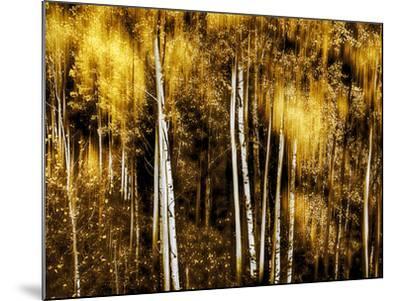 Golden-Ursula Abresch-Mounted Photographic Print