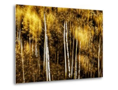 Golden-Ursula Abresch-Metal Print