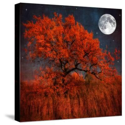 Halloween Color-Philippe Sainte-Laudy-Stretched Canvas Print