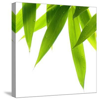 Life Is Green-Philippe Sainte-Laudy-Stretched Canvas Print