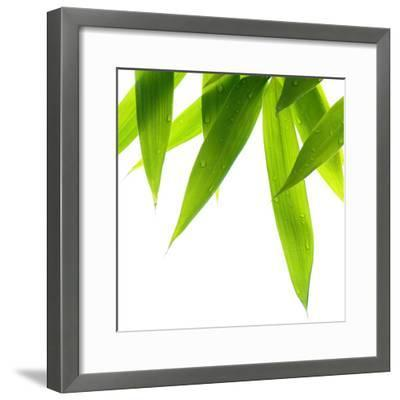 Life Is Green-Philippe Sainte-Laudy-Framed Photographic Print