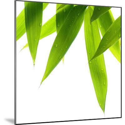 Life Is Green-Philippe Sainte-Laudy-Mounted Photographic Print
