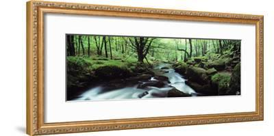 Waterfall in a Forest, Golitha Falls, River Fowey, Cornwall, England--Framed Photographic Print