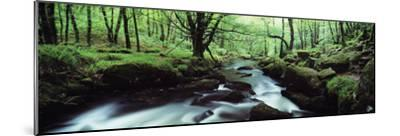 Waterfall in a Forest, Golitha Falls, River Fowey, Cornwall, England--Mounted Photographic Print