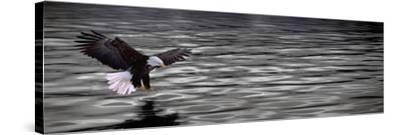 Eagle over Water--Stretched Canvas Print