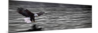 Eagle over Water--Mounted Photographic Print