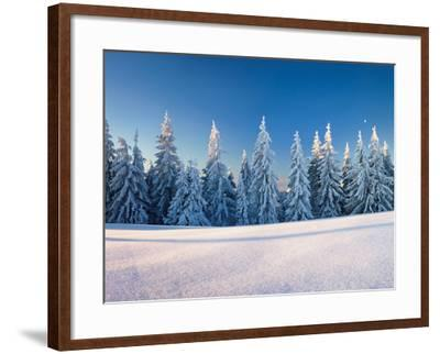 Snow Covered Trees on a Landscape, Belchen Mountain, Black Forest, Baden-Wurttemberg, Germany--Framed Photographic Print
