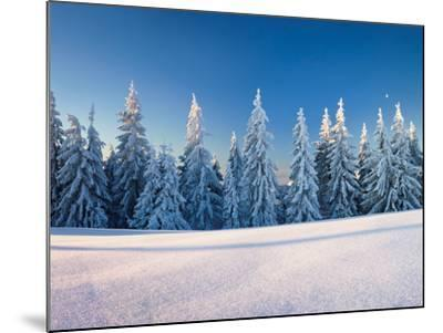 Snow Covered Trees on a Landscape, Belchen Mountain, Black Forest, Baden-Wurttemberg, Germany--Mounted Photographic Print