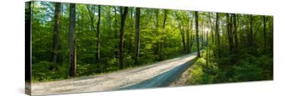 Dirt Road Passing Through a Forest, Great Smoky Mountains National Park, Blount County, Tennesse...--Stretched Canvas Print
