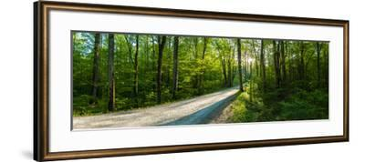 Dirt Road Passing Through a Forest, Great Smoky Mountains National Park, Blount County, Tennesse...--Framed Photographic Print